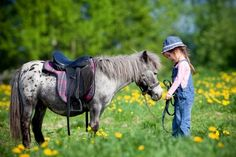 A Practical Guide for Buying Your First Horse 23/06/2014 PRE for Sale Articles, Horse tips and tricks Horse Buying Guide, Horse tips Edit