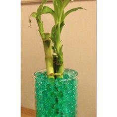 Lucky bamboo with water marbles doing next time i have lucky bamboo