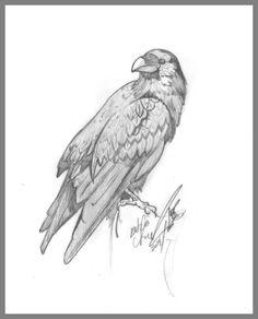 Raven Study in Graphite by Echo Chernik  http://www.kickstarter.com/projects/echox/echo-chernik-kickstarter-only-editions-raven