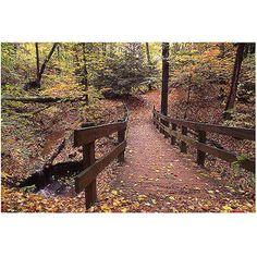 """Trademark Art """"Autumn Bridge"""" Canvas Wall Art by Kurt Shaffer"""