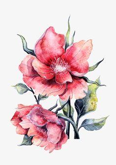 Illustration on Behance Art Floral, Floral Drawing, Watercolor Artwork, Watercolor Print, Watercolor Flowers, Botanical Flowers, Botanical Prints, Impressions Botaniques, Illustration Botanique