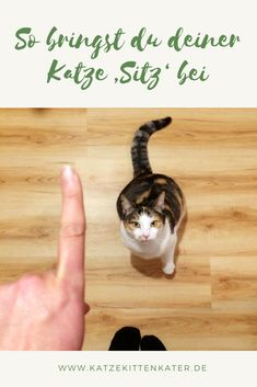 Pet Dogs, Dog Cat, Pets, Best Friends, Animals, Tricks, Ninja, Pretty Cats, Doggies