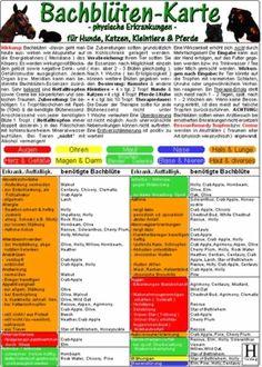 Bachblüten-Karten für Hunde, Katzen, Kleintiere & Pferde - organische Erkrankungen -