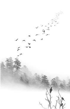 Birds in the Mist by Greg Waters Robert Frank, Photoshop, Art Mural, Black And White Photography, Aesthetic Wallpapers, Art Sketches, Landscape Paintings, Mists, Art Photography