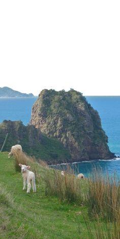 One of New Zealand's must do walks, the Coromandel Coastal Walkway