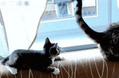 I Was Just Admiring Your Tail...High Five?