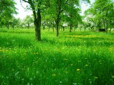 """Search Results for """"beautiful grass hd wallpaper"""" – Adorable Wallpapers Scenery Background, Natural Background, Natural Park, Natural Scenery, Green Lawn, Green Grass, Hd Nature Wallpapers, Smile Images, Flower Landscape"""