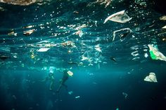 14 Shocking Images Of Our Broken Oceans That Will Inspire You To Save The World - Mpora