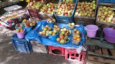 Fruchtbares Ourika-Tal, Marokko: Die frisch gepflückten Äpfel schmecken einfach köstlich - ganz besonders nach einer Wanderung! Marrakech, Watermelon, Abs, Fruit, Food, Fertility, Morocco, Fresh, Abdominal Muscles