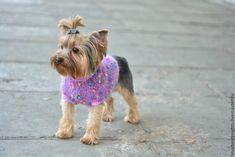 """Купить Свитерок для маленькой собачки """"Гламур"""" - маленькая собачка, мохер, пуговицы декоративные, шерсть 100%"""