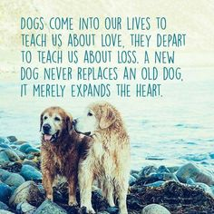 Dogs come into our lives to teach us about love.