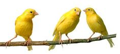 everything in yellow looks happy  #SephoraColorWash