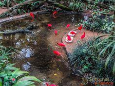 Parque das Aves -