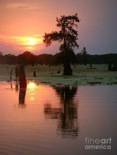 Sunset Atchafalaya Swamps Artist: Tessa Fairey