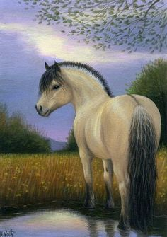 PEACEFUL EVENING......this fjord horse is enjoying a peaceful evening in a golden pasture