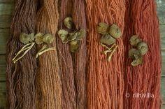 Riihivilla, Dyeing with natural dyes: Recent Cortinarius colors Verihelttaseitikkivärejä viime viikolta