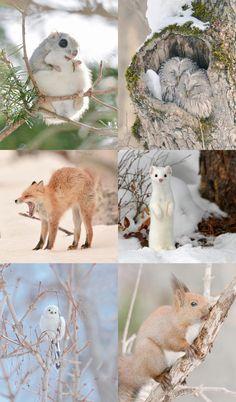 See the Hokkaido Island animals - Japan for animal lovers