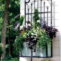 "dark and green window box. Not a fan of window boxes but I love the iron work behind this. I wouldn't consider this a ""window box "" exactly."