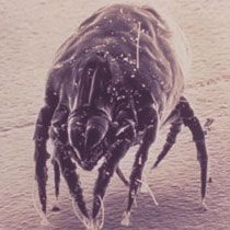 Home humidity levels can allow dust mites and mold to flourish. Try these techniques to help you decrease the humidity in your home. Bug Control, Pest Control, House Insects, Household Pests, Household Tips, Types Of Insects, Pest Management, Spark People, Big Animals