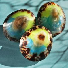limpet shells. I have a multicolored one, but not like this!