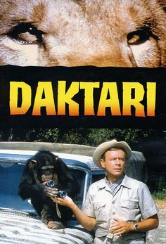 Daktari was a children's drama series that aired on CBS from It starred Marshall Thompson as Dr. Marsh Tracy, Clarence the cross-eyed lion & Judy the chimp. It was syndicated & ran on TV through the mid - late It took place in East Africa. Tv Retro, Tv Vintage, Mejores Series Tv, Old Shows, Great Tv Shows, Classic Tv, My Childhood Memories, The Good Old Days, Great Movies