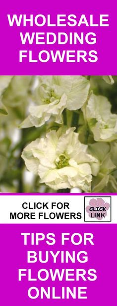 Wedding Flowers Wholesale - Save Money by Following Buying Tips by Professional Florist - White Larkspur Discount Flowers, Buy Flowers Online, Flowers Wholesale, Wedding Flowers, Wedding Ideas, Money, Tips, Silver, Wedding Ceremony Ideas