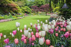 The Butchart Gardens - Vancouver Island, Canada Botanical Gardens Near Me, Buchart Gardens, Victoria British Columbia, Garden Office, Spring Has Sprung, Garden Seeds, Vancouver Island, Four Seasons, Horticulture