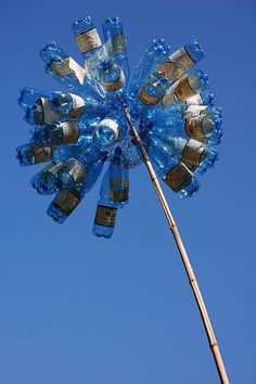 Blue bottle flower