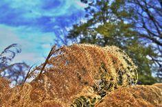 grass grain