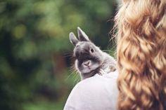 bunny, kawaii, and rabbit image