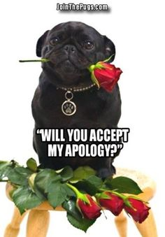 Pug Says He's Sorry - Join the Pugs is the MOST FUN Pug community with over 130,000 Pug lovers from around the world! Pug Power!