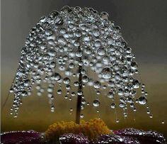 a little dew tree!