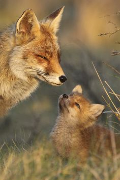 beautiful-wildlife: Mother and childbyJoke Hulst
