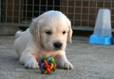 I WILL have this puppy someday