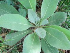 Sozo Artisan Soaps Blog | A Peek Into Medicinal Herbs