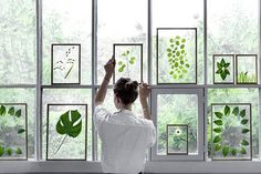 green space Press leaves of all shapes and sizes for a pop of green. It's even more beautiful to hang these in a window, taking advantage of your home's natural light.