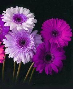 95 best purple flowers purple plants images on pinterest purple flowers mightylinksfo