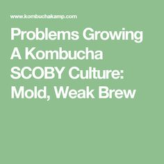 Problems Growing A Kombucha SCOBY Culture: Mold, Weak Brew