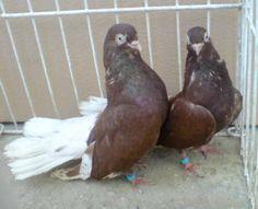 Parrot, Bird, Animals, Parrot Bird, Animales, Animaux, Birds, Animal, Animais