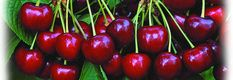 Beaumont Cherry Festival 2018 - 100th Anniversary!!! - Home