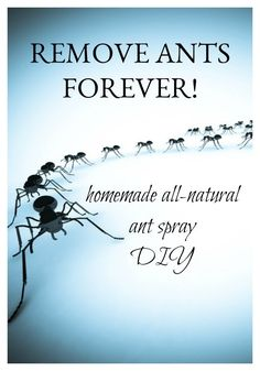 As far as possible, this post will concentrate on pest control tips that would assist keep away as much pests as you can. Some of the advises provided here will deal on specific pests but some may … Home Remedies For Ants, Ant Remedies, Best Pest Control, Weed Control, Natural Ant Repellant, Essential Oil Ant Repellant, Essential Oils, Kitchen Ants, Home Design