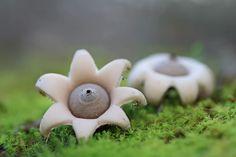 C'est l'automne, et c'est bientôt la saison pour partir à la cueillette des champignons. Mais savez-vous à quel point les champignons sont...beaux ? Quand on pa