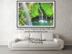 Types Of Photography, Photography Website, Photography Photos, Fine Art Photography, Spring Air, Spring And Fall, Dogwood Trees, Dripping Springs, How To Show Love