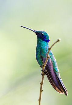 Cute & pretty little hummingbird