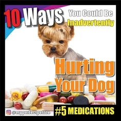5.  Medications  Owners unwittingly poison their dogs with human medication all of the time.  If the dog hurts himself or coughs many owners will administer human pain medication and human cough medication.  Dogs cant metabolize human medications.  There are very few drugs that can safely cross species.  Even prescription medications are not the same nor administered in the same dosage.  Would it surprise you to know that dogs with thyroid disorders take a much higher dose than an adult…