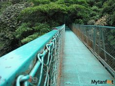 50 things to do in costa rica - hanging bridges monteverde