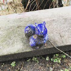 Squirrel applying for Blue Man Group.  #hamburg #squirrel #eichhörnchen #blau #latergram #welovehh #hamburgmeineperle #altona #squirrelsofinstagram #ichliebeeichhörnchen #blueanimal #feelingblue