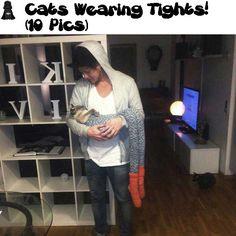 Cats Wearing Tights (10 Pics)