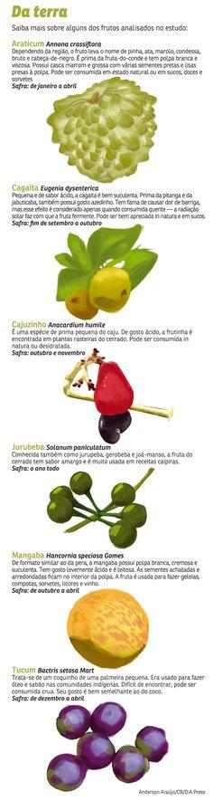 Pesquisa da UnB aponta que cerrado é uma fonte saborosa de nutrientes - Ciência e Saúde - Correio Braziliense