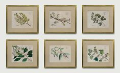 Set of 6 Draakenstein Botanicals in closed corner frames. Each frame is a green paint and a 22 karat gold cover. Framed to conservation standards with archival materials. Old Maps, Antique Maps, Antique Prints, Types Of Art, Custom Framing, Decor Styles, Gallery Wall, Fine Art, Antiques